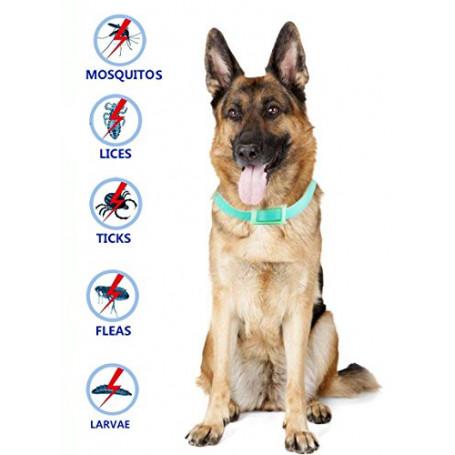 Pulci e zecche collare cane collare antipulci pulci e zecche collare per cani regolabile impermeabile Proteggere per cani, smett
