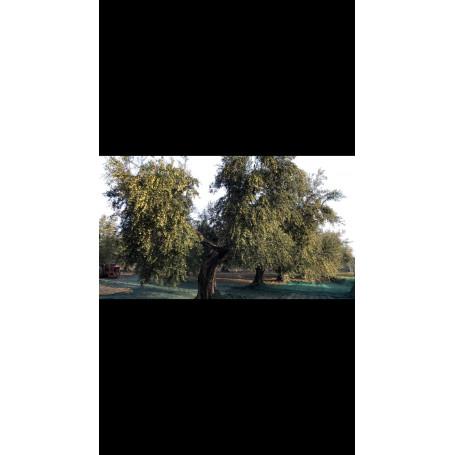 Voglia Di Puglia Olio Extravergine Di oliva Orcio  Ceramica  *** Colore Arcobaleno, Formato Litri 0,500, CONFEZIONE 1 pz.