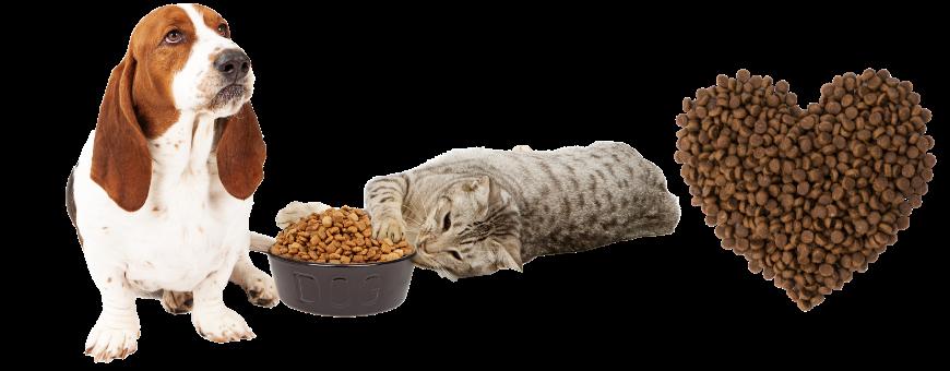 Alimentazione per cani e gatti